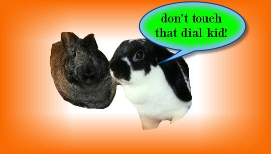 http://www.rabbitbites.com/itunes/dt.jpg